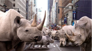 white rhinos in New York
